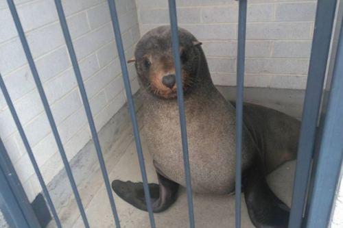sammy-the-seal